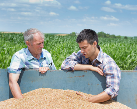 cereals holding hands: Two farmers looking at wheat grain in trailer after harvest Stock Photo