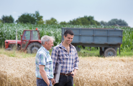 Two farmers talking on wheat field during harvest. Tractor with trailer in background