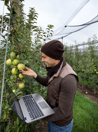 anti season: Attractive agronomist with laptop standing in apple orchard and checking fruit Stock Photo