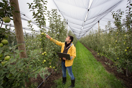 agronomist: Attractive agronomist with laptop standing in orchard and checking fruit
