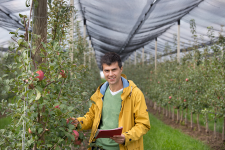 Attractive agronomist with notebook standing in apple orchard and checking fruit Stock Photo