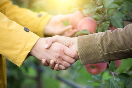 Close up of two men shaking hands in orchard. Agribusiness concept Standard-Bild