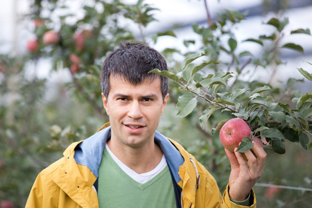 agronomist: Attractive agronomist standing in apple orchard and showing fruit