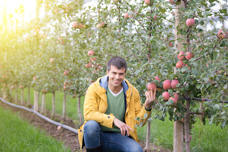 agronomist: Attractive agronomist squatting in apple orchard and showing fruit Stock Photo