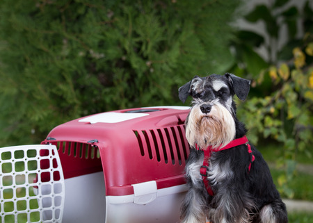 obedient: Obedient dog sitting next to plastic carrier for dog transportation in garden