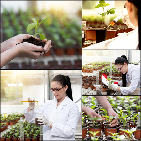 technology collage: Collage of young female engineer in greenhouse with testing equipment and sprouts Stock Photo