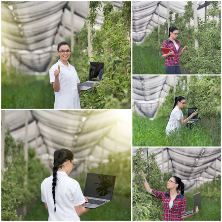 agronomist: Collage of young woman agronomist checking fruit trees in modern orchard with anti-hail net