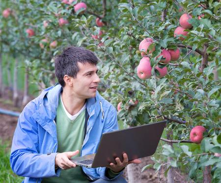 en cuclillas: agrónomo atractivo con el ordenador portátil en cuclillas en el huerto de manzanas y de comprobar la fruta