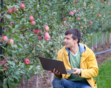 en cuclillas: Attractive agronomist with laptop squatting in apple orchard and checking fruit