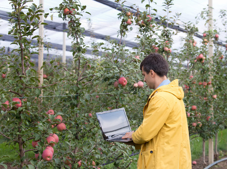 agronomist: Attractive agronomist with laptop standing in apple orchard and checking fruit Stock Photo