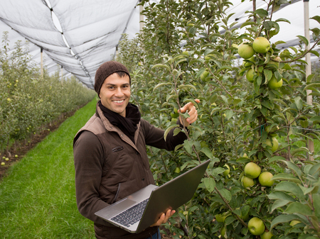 agronomist: Attractive agronomist with laptop standing in apple orchard and checking fruit and leaves Stock Photo