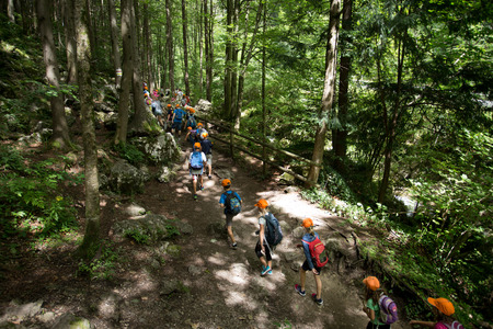Group of school children walking in forest in one day excursion