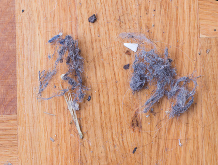 keeping room: Top view of dust and hair clot on parquet floor. Housework concept