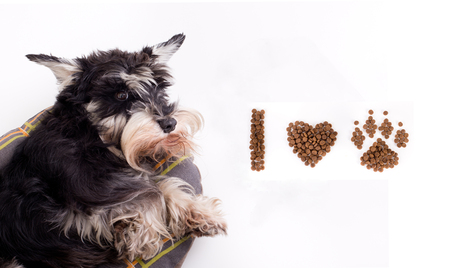 granule: Cute dog lying beside text I love dog drawn in symbols with his dry food