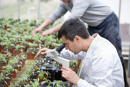 Biologist in white coat sitting beside microscope in green house and researching sprouts growth. Plant protection concept