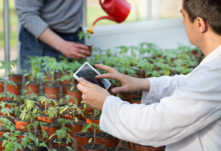 Biologist in white coat holding tablet in front of sprouts in pots in greenhouse. Worker watering seedlings in background. Plant protection concept