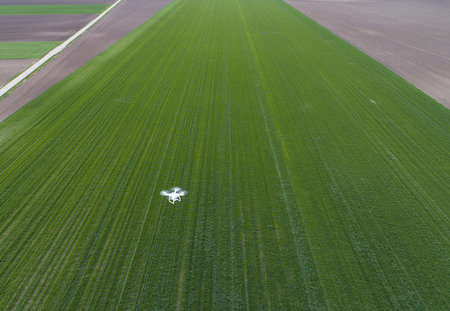 Drone flying over green wheat field in spring. Technology innovation in agricultural industry