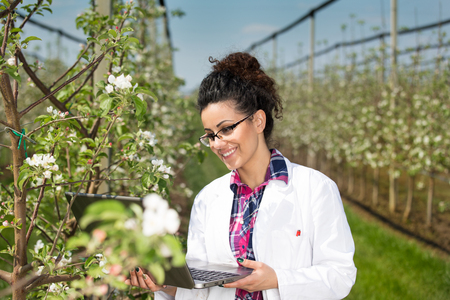 Young woman agricultural engineer in white coat and with laptop standing beside fruit tree with white blossom in modern orchard in spring Stock Photo
