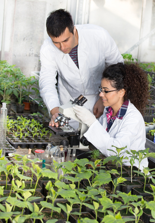 Two young engineers working in greenhouse with microscope and sprouts. Plant protection and care concept