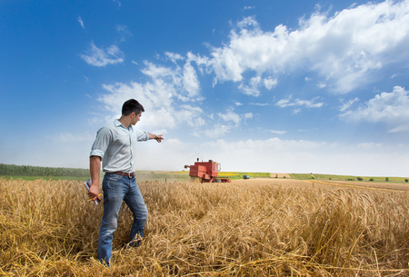 Young handsome farmer standing in golden wheat field and pointing at combine harvester that working in background. Seasonal agricultural works Stock Photo