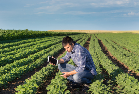 Young handsome agriculture engineer squatting in soybean field with tablet in hands in early summer