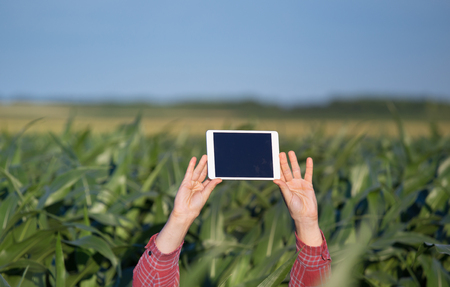 Farmer holding tablet with blank black screen horizontal high above corn plants in field Stock Photo