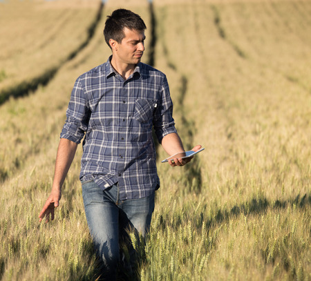 cultivating: Young handsome farmer with tablet walking in wheat field in early summer