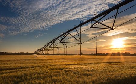 麦畑の散水作物の灌漑システムで美しい夕日。農村景観における黄金の時間