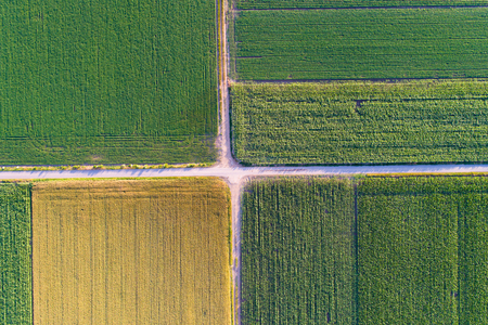 Abstract geometric shapes of agricultural parcels of different crops in yellow and green colors. Aerial view shoot from drone directly above field Reklamní fotografie - 80399439
