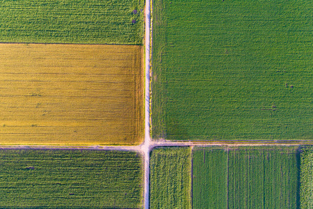 fertile land: Abstract geometric shapes of agricultural parcels of different crops in yellow and green colors. Aerial view shoot from drone directly above field