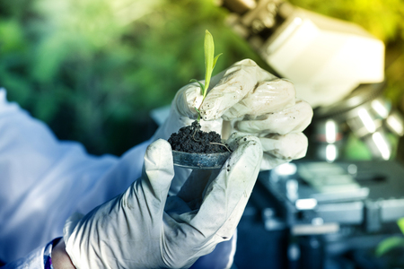 Close up of biogist's hand with protective gloves holding young plant with root above petri dish with soil. Microscope in background. Biotechnology, plant care and protection concept