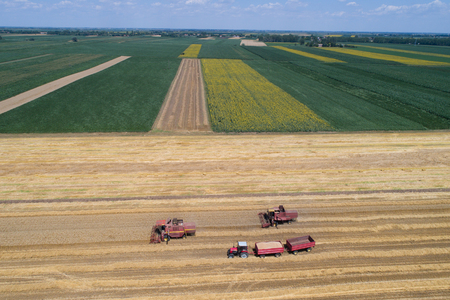 the arable land: Aerial image of combine harvesters and tractor working in ripe golden wheat field with corn and sunflower parcels in background. Harvesting in summer time