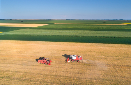 the arable land: Aerial image of two combine harvesters working in golden wheat field. Harvest in summer agricultural works Stock Photo