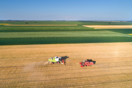 Aerial image of two combine harvesters working in golden wheat field. Harvest in summer agricultural works Фото со стока