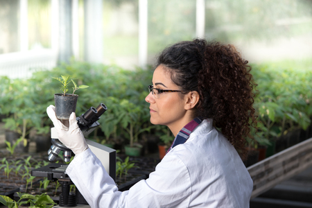 Young woman biologist holding flower pot with sprout and checking it growth. Plant protection concept