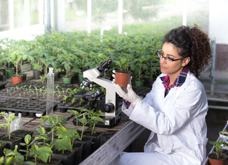 Young woman biologist holding flower pot with sprout and checking it growth in greenhaouse. Plant protection concept Stok Fotoğraf