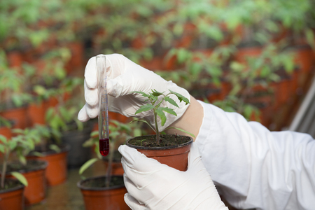 Biologist holding flower pot with sprout and test tube with chemicals in greenhouse. Plant protection and biotechnology concept Standard-Bild