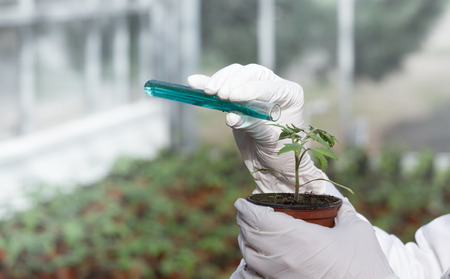 Close up of biologist's hands with gloves pouring liquid chemicals in flower pot with sprout in greenhouse. Plant protection and biotechnology concept