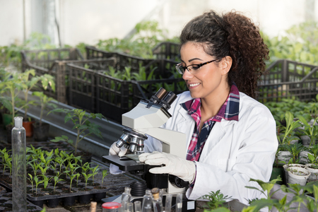 Young biologist sitting at microscope with seedlings around her in greenhouse. Microbiology, biotechnology and bioengineering concept Stock Photo