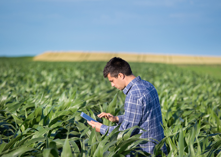 Young handsome agriculture engineer standing in corn field with tablet in early summer Stockfoto