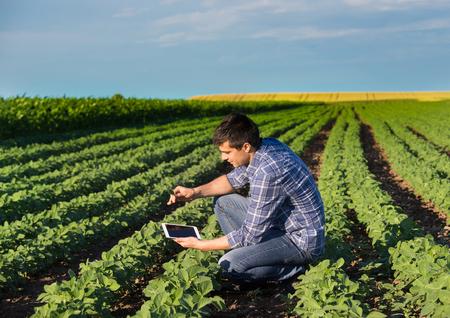 Jeune ingénieur agricole beau accroupi dans le champ de soja avec un comprimé en mains au début de l'été