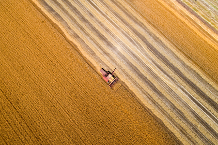Aerial image of combine harvester harvesting golden wheat plants. Agriculture works in summer