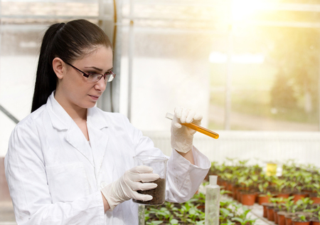 Young woman biologist in white coat pouring liquid from test tube into pot with soil. Sprouts in background in greenhouse