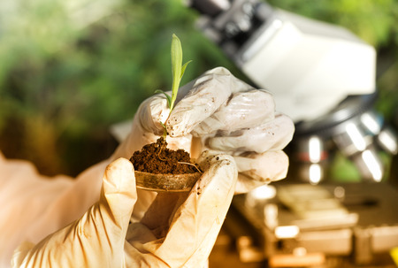 Close up of biogist's hand with protective gloves holding young plant with root above petri dish with soil. Green background. Biotechnology, plant care and protection concept