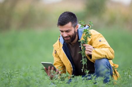 Jonge boer met baard houden tablet en klaver planten in het veld Stockfoto