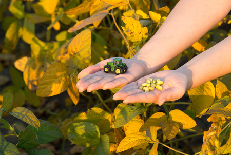 biomasa: Young woman holding tractor toy and grains in hands above soybean plants in harvest time. Agribusiness concept