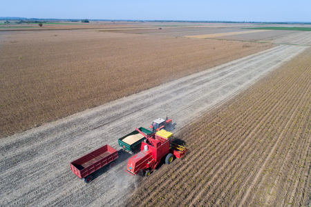 Aerial image of soybean harvest. Combine harvester loading truck trailers with grain shoot from drone