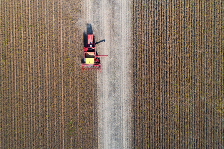 Aerial image of soybean harvest. Combine harvester working in golden field in fall Stock Photo