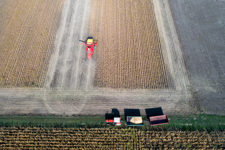 Aerial image of soybean harvest. Combine harvester and tractor with trailers working in golden field in fall Stock Photo