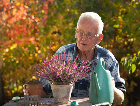 Senior man taking care of plants at table in garden